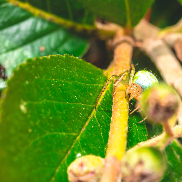 """""""Nice green spider with dots on body sitting on green leaf"""" stock image"""