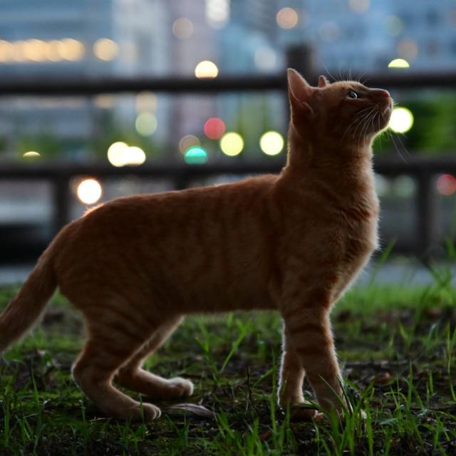 """Cat at evening"" stock image"