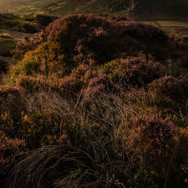"""The Roaches at sunset"" stock image"
