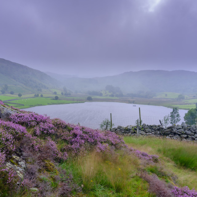 """Overcast and drizzle view over Watendlath Tarn, Lake District Na"" stock image"