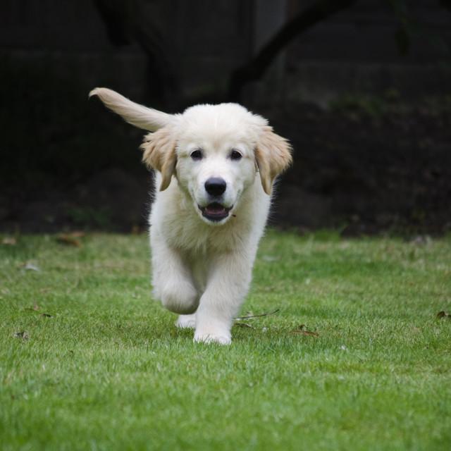 """Puppy walk"" stock image"