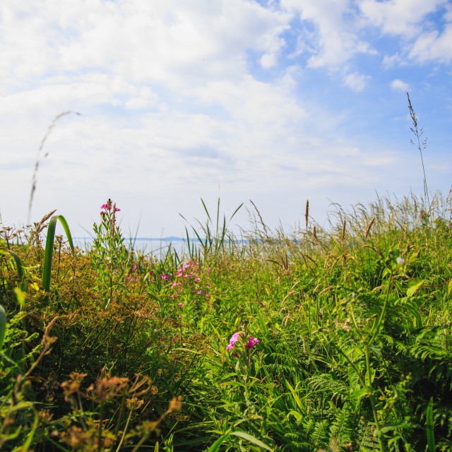 """Wild Flowers on the Coast path"" stock image"