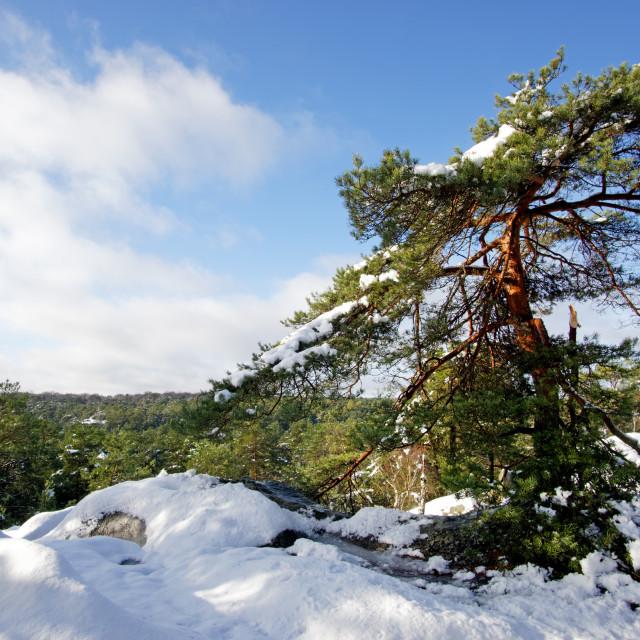 """Gorges de Franchard in Winter"" stock image"