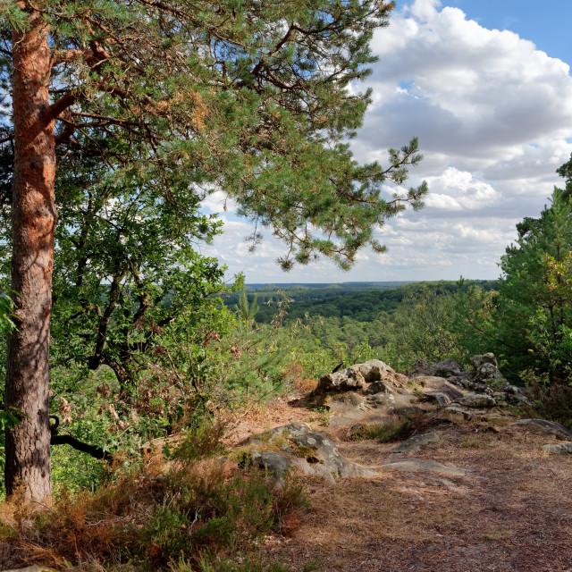 """Trois pignons forest"" stock image"