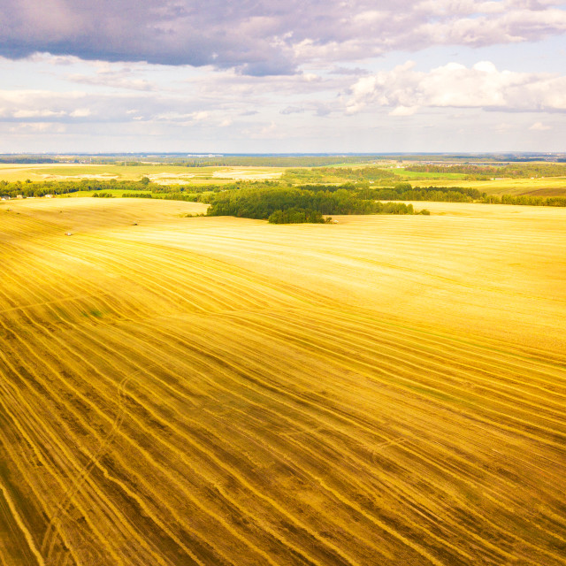 """""""Harvester machine working in field. Agriculture. Aerial view fro"""" stock image"""