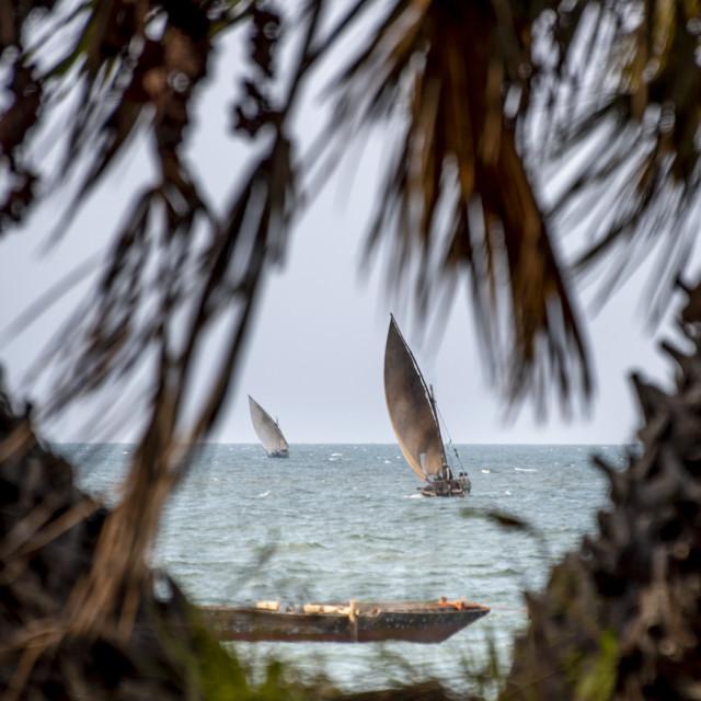 """""""Dhows at sail"""" stock image"""