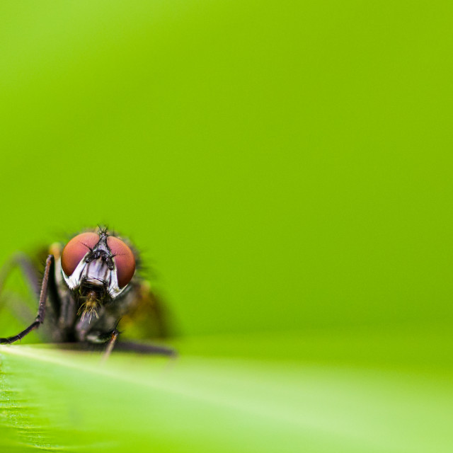 """""""Fly on a green leave"""" stock image"""