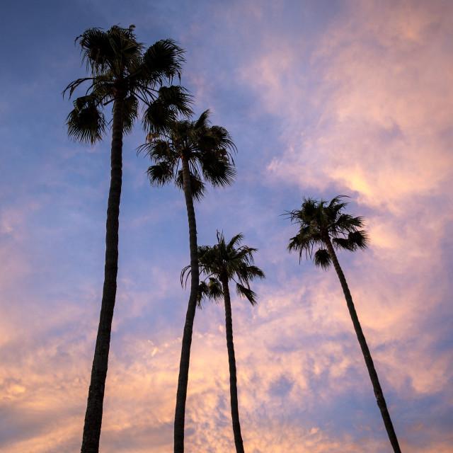 """California dreaming"" stock image"