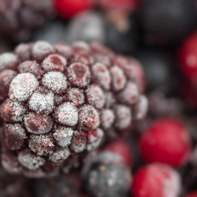 """Frozen loganberry"" stock image"