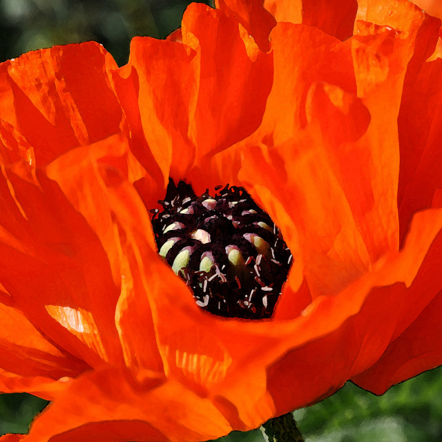 """""""poppies painting style"""" stock image"""