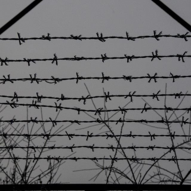"""""""Barbedwire against trees"""" stock image"""