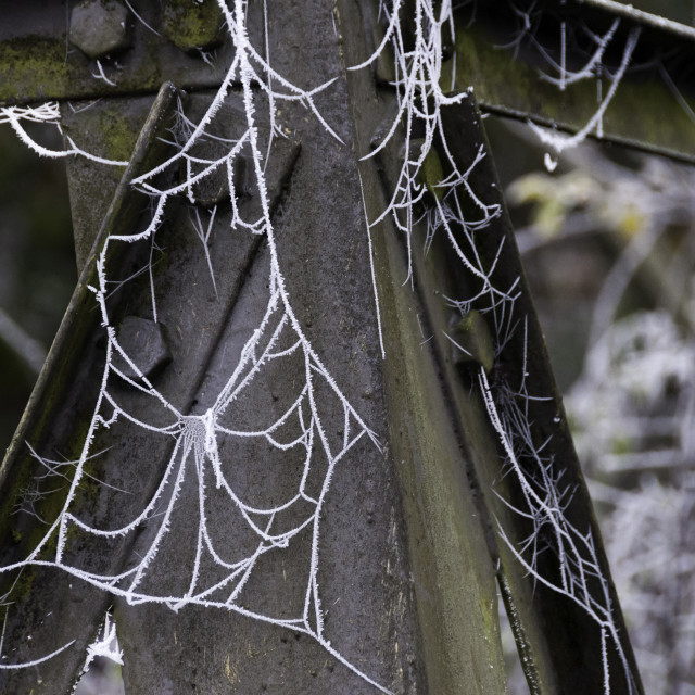 """""""Frosty spiders web on girders"""" stock image"""