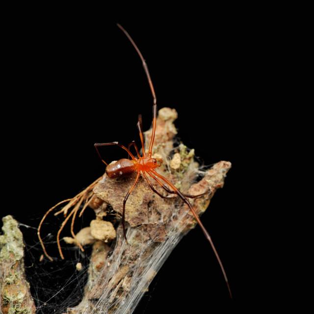 """""""Food Stealer Spider"""" stock image"""