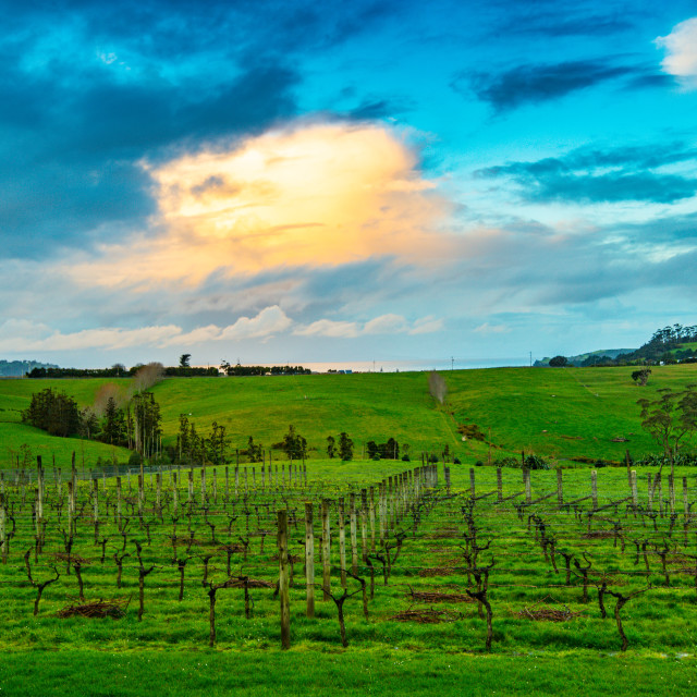 """Sunset over Takatu Lodge // Matakana, New Zealand"" stock image"