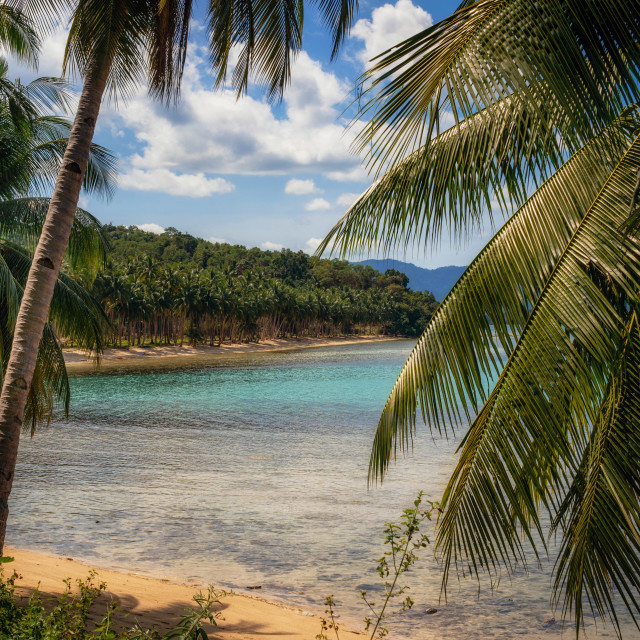 """Palm trees on Coconut Beach in Port Barton, Palawan, Philippines"" stock image"