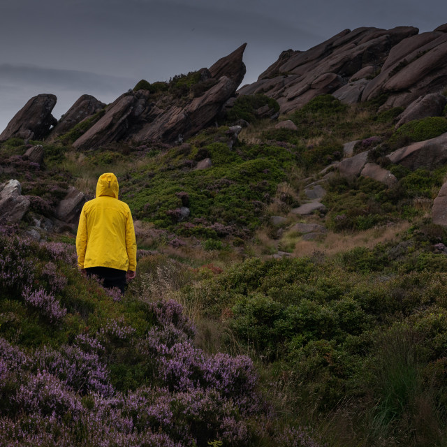 """In among the heather at Ramshaw Rocks"" stock image"