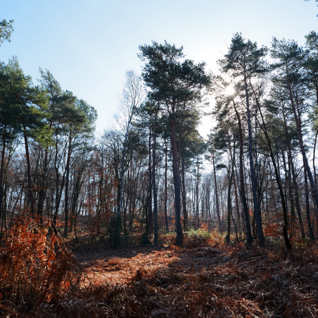 """Denecourt hiking trail 9"" stock image"