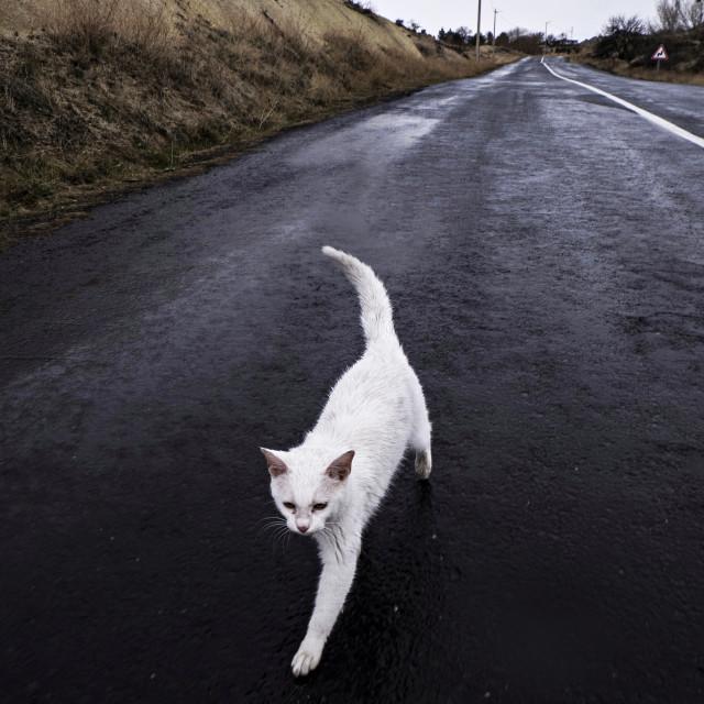 """Cappadocia cat"" stock image"