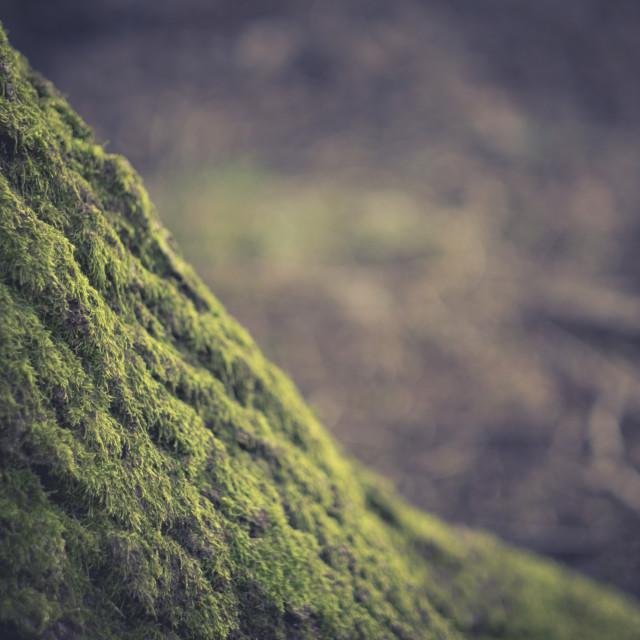 """Moss on Tree"" stock image"