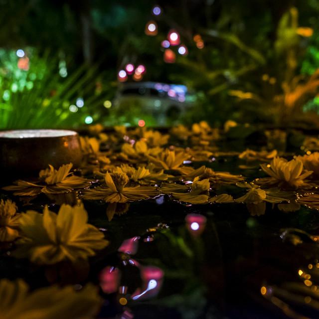 """Tropical Pond"" stock image"