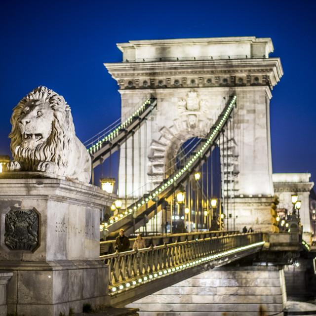 """""""Chain Bridge in Budapest, Hungary at night"""" stock image"""