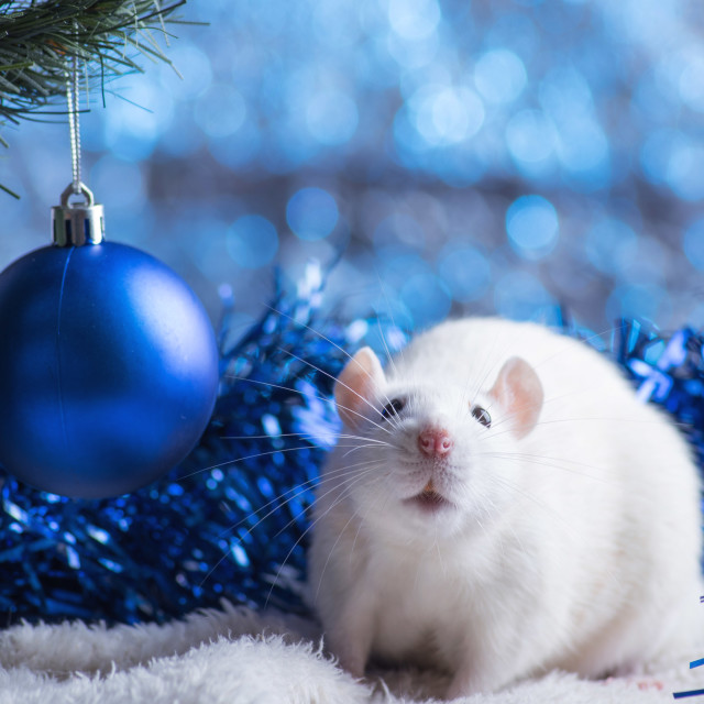 """""""Happy New Year! Symbol of New Year 2020 - white or metal (silver) rat. Cute rat with Christmas decorated"""" stock image"""