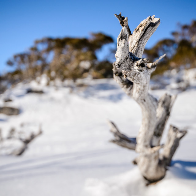 """Blurred snowscape"" stock image"