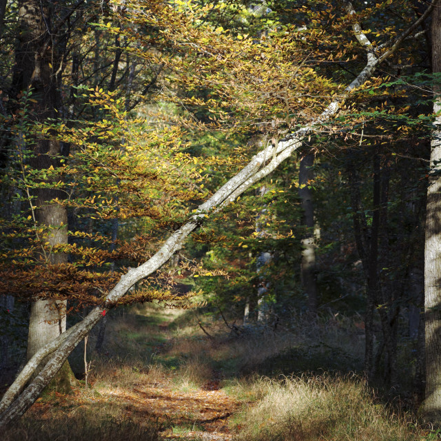"""Perspective Maintenon path"" stock image"