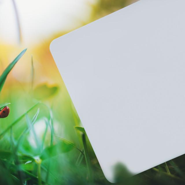 """Blank card on grass with ladybug"" stock image"