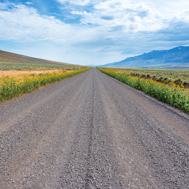 """Gravel Road, Wildflowers, and Steens"" stock image"