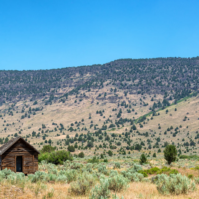 """Abandoned Cabin with the Steens in the background"" stock image"