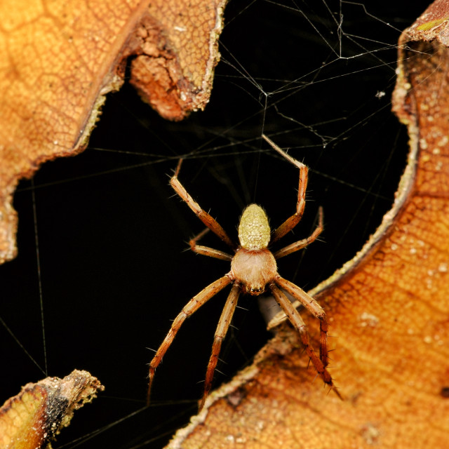 """""""Spider Of The Black Hole"""" stock image"""