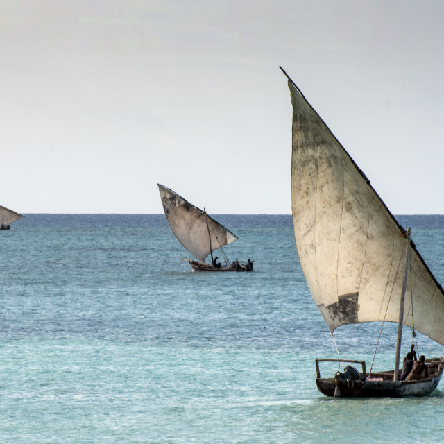 """""""Dhows sailing"""" stock image"""