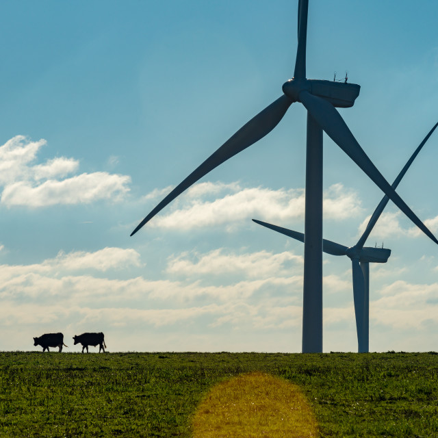 """Two cows wind turbines"" stock image"