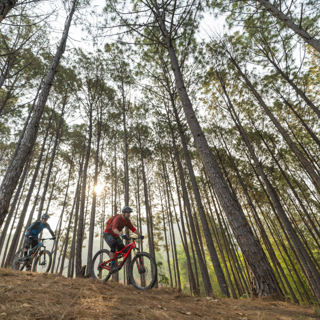 """""""Mountain bikers descend through a forest at sunrise"""" stock image"""
