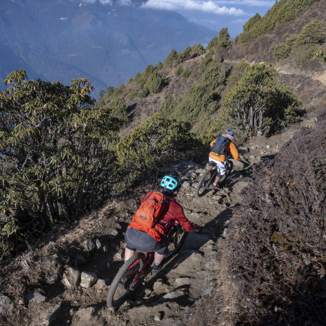 """""""Mountain bikes speed past in a blur along a Enduro style single track trail..."""" stock image"""