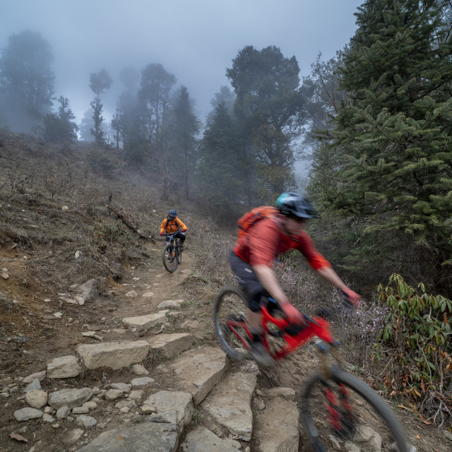 """""""Mountain bikes descend through a misty forest in the Gosainkund region in the..."""" stock image"""
