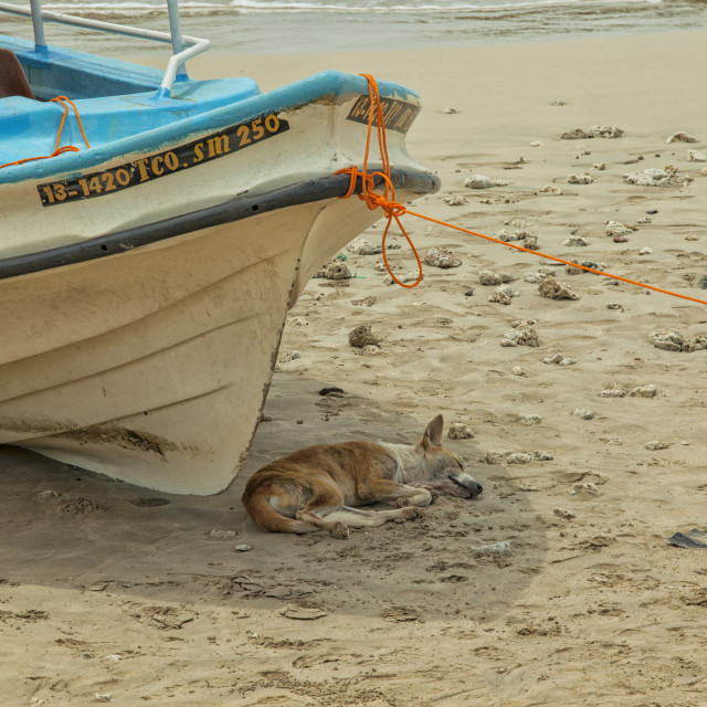 """Dog sleeping in shade of boat on beach"" stock image"