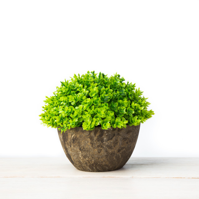 """Artificial green plant"" stock image"
