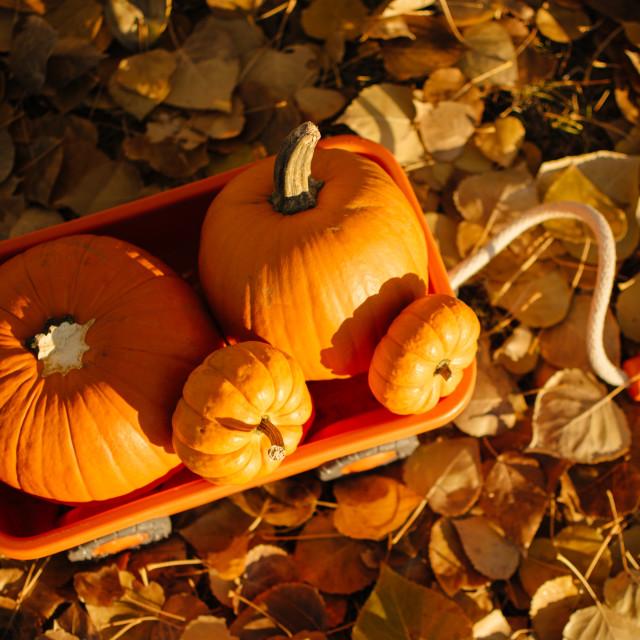 """Pumpkin Wagon"" stock image"