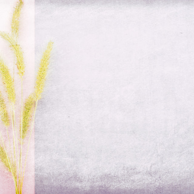 """green pennisetum still life plants part - textured pink background"" stock image"
