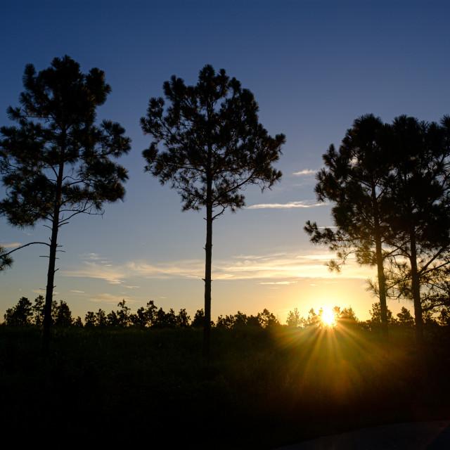 """Sunrise Over lake Louisa Stare Park"" stock image"