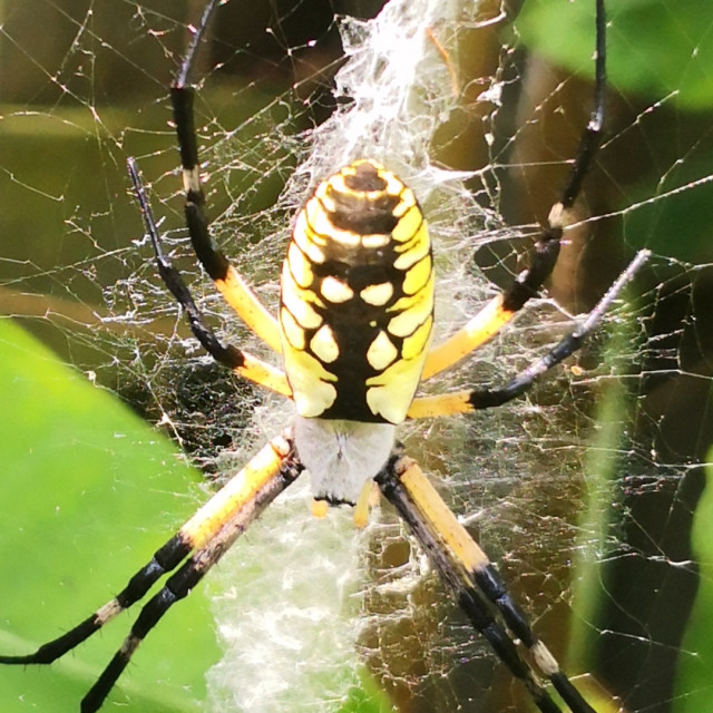 """""""Spider and Web"""" stock image"""