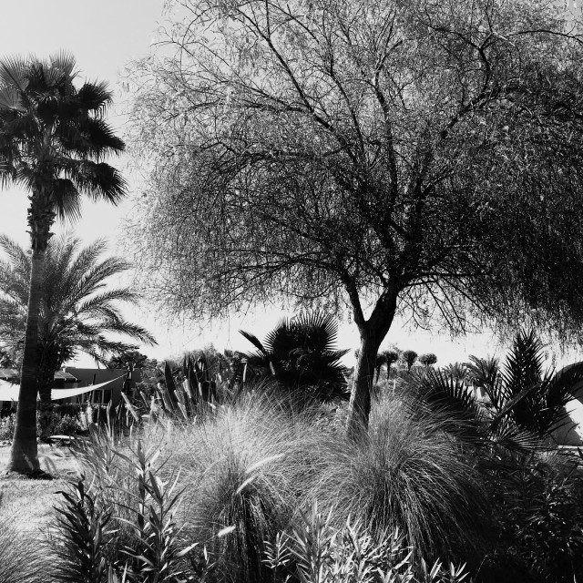 """""""A Marrakech garden in the Palmeraie district."""" stock image"""