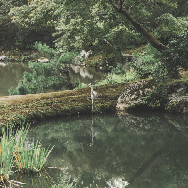 """Heron in Japanese Garden"" stock image"