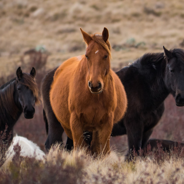 """Brumbies"" stock image"