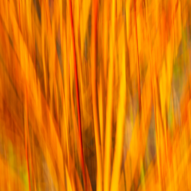 """""""Flameburst"""" stock image"""