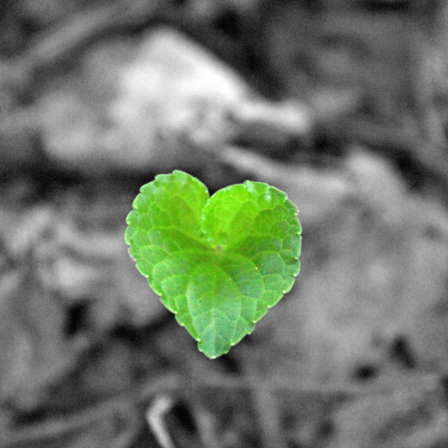 """a green heart for you"" stock image"