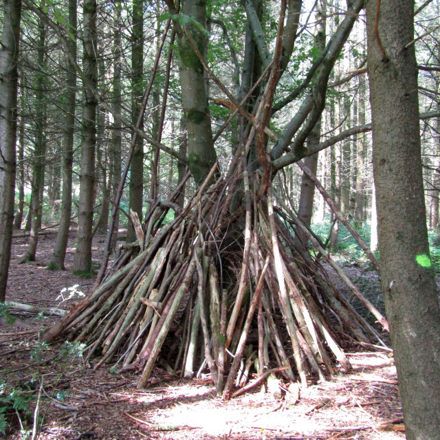 """""""Tree wigwam in Quantock Hills forest"""" stock image"""