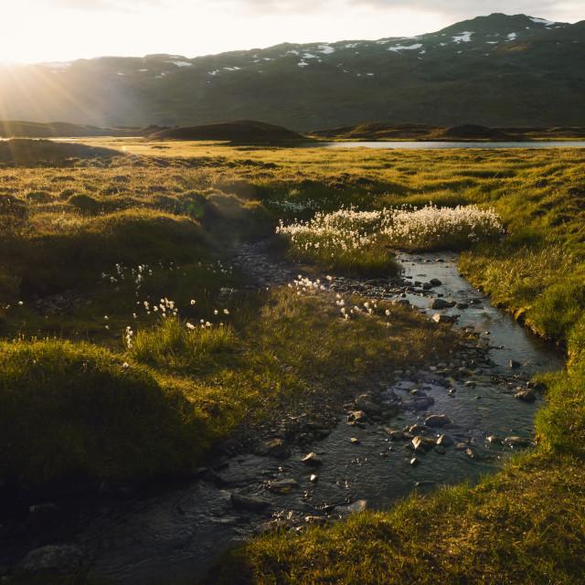 """Golden Hour on the Kungsleden Trail"" stock image"